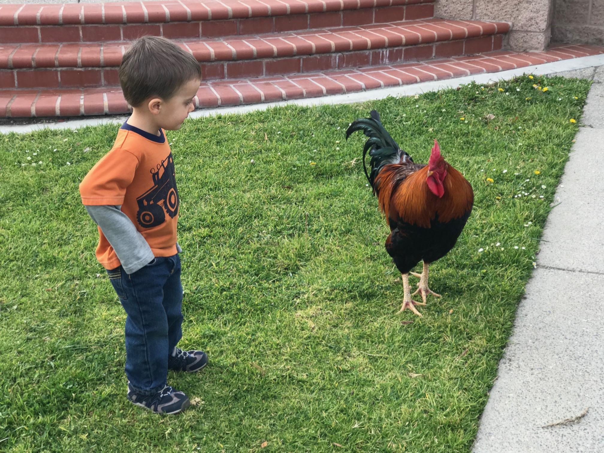 vilage roosters.jpg
