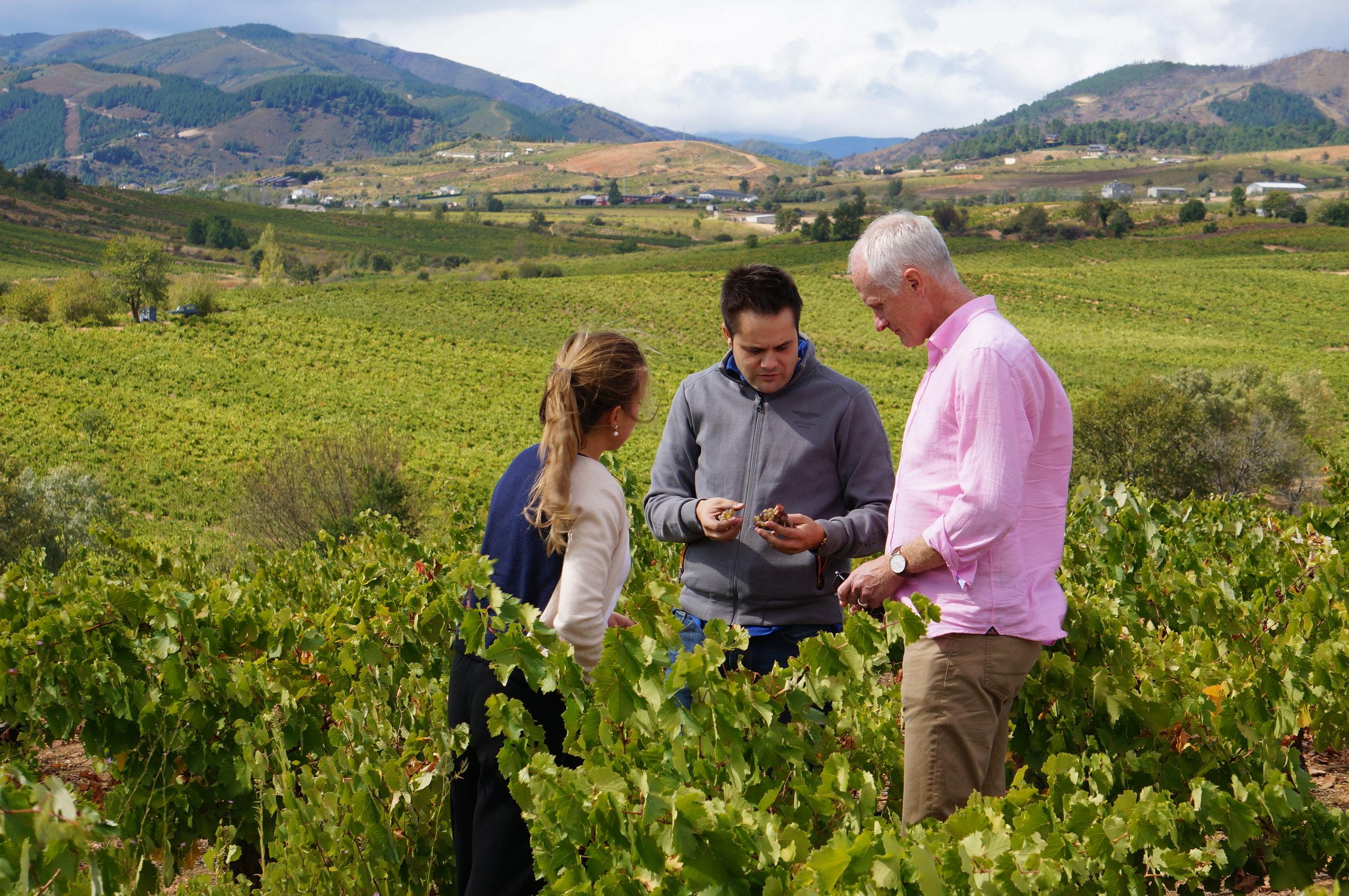 Bierzo In the vineyard.jpg