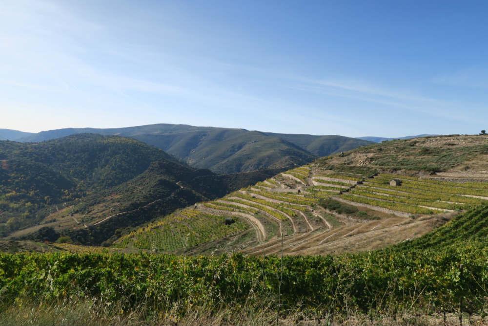 Valdeorras Spanska viner.jpg