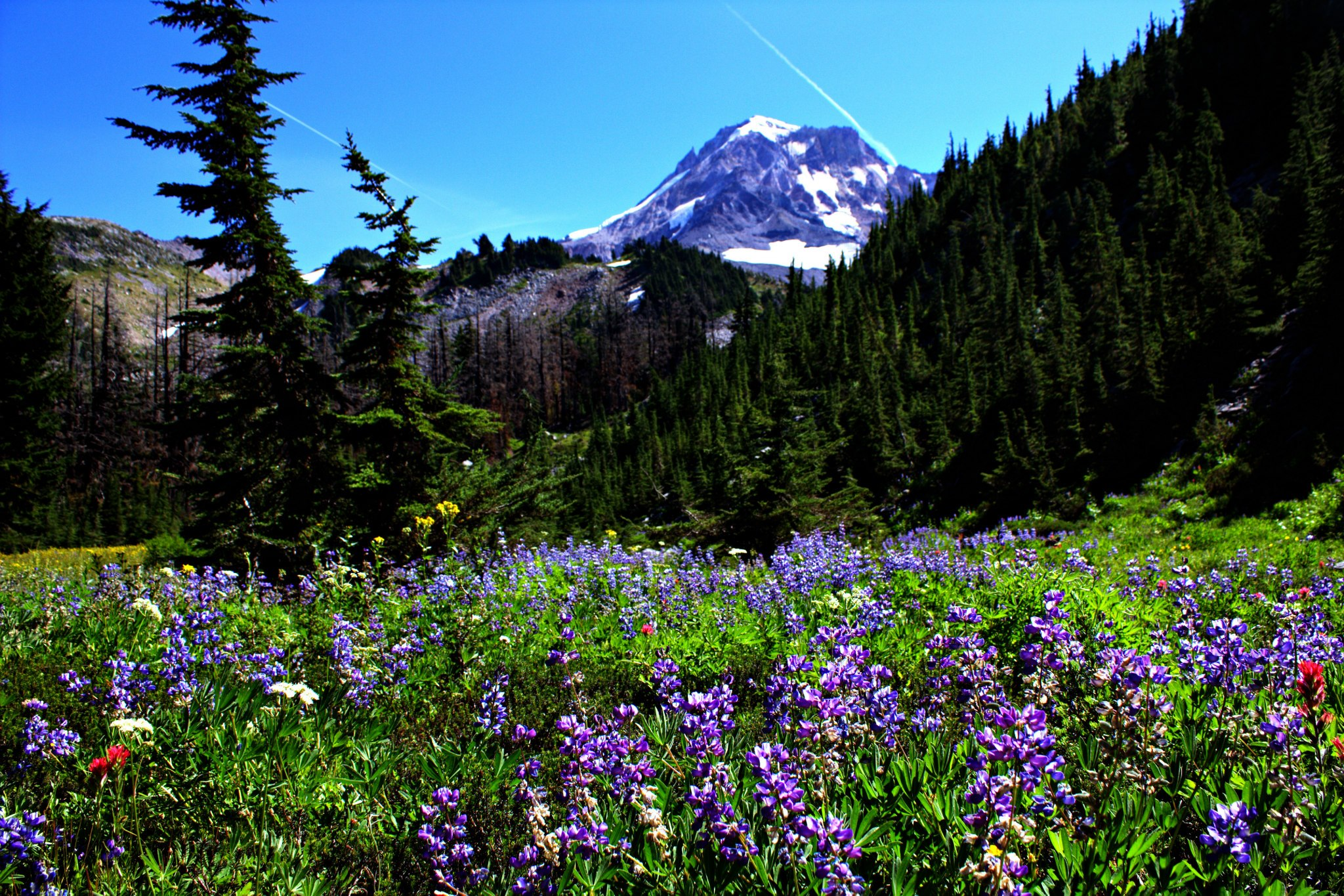 Mount hood, Columbia River Gorge, Fruit Loop, wine tasting, windsurfing, mountain biking, kiteboarding, snowboarding, skiing, snowshoeing, hiking, wildflowers, photography, apple orchards, cider, 4x4, 4 wheel drive, offroading, overlanding