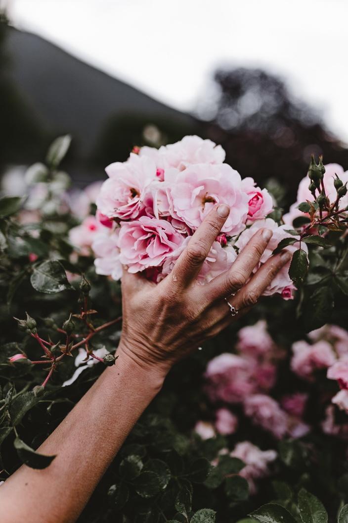 Roses-02.jpg