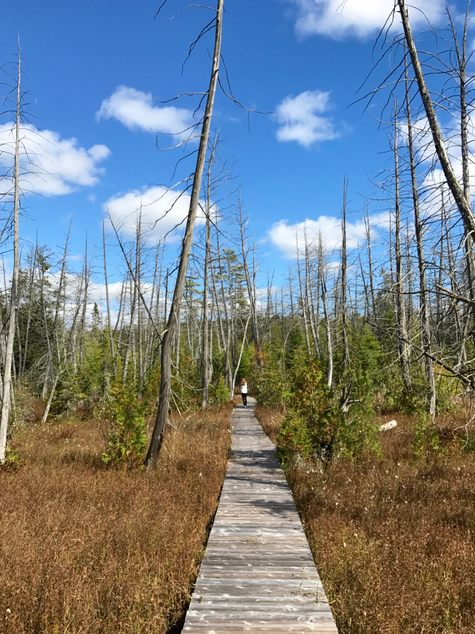 Marsh Boardwalk on a Sunny Autumn Day
