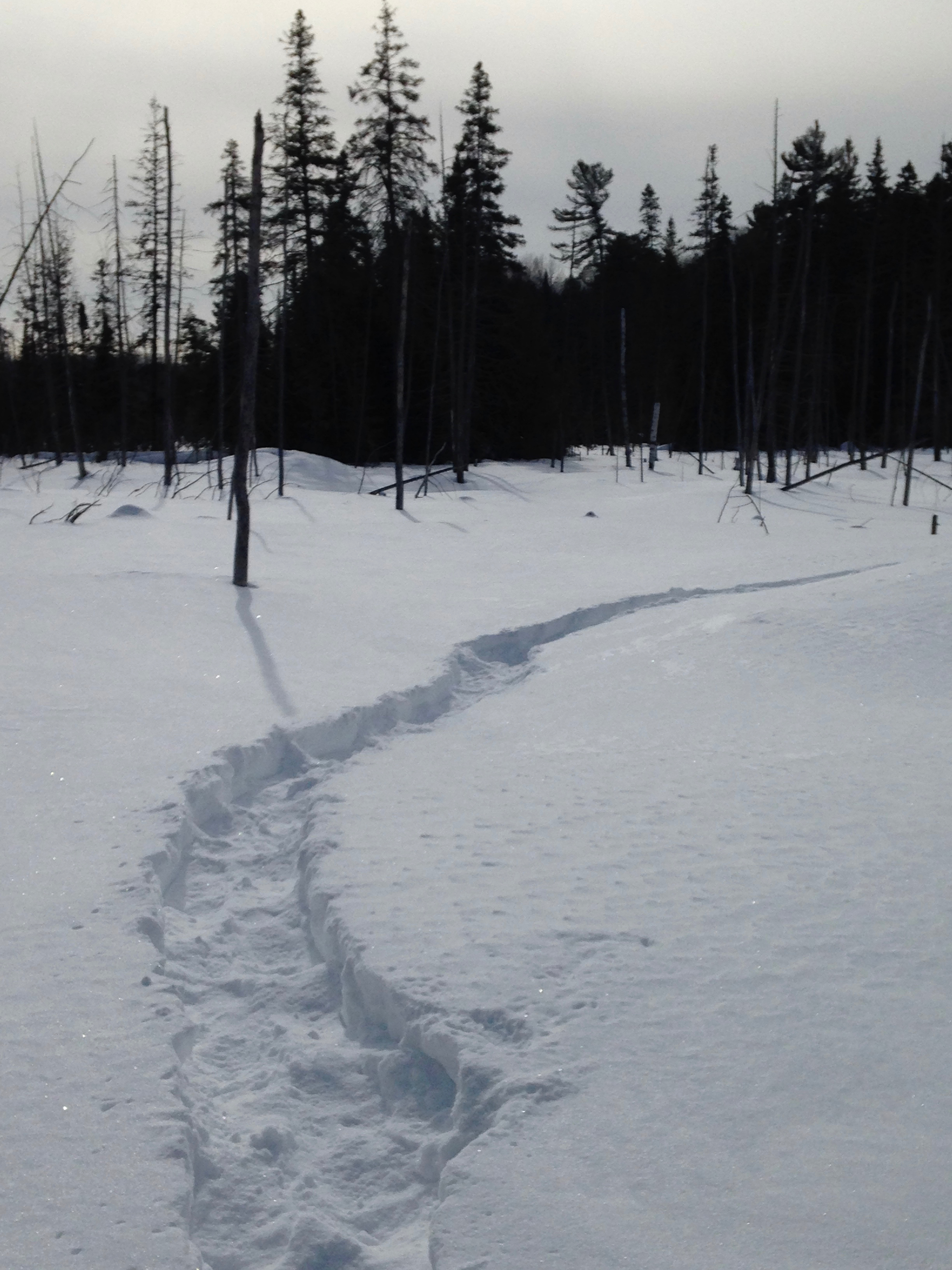 Make Tracks on Our Extensive Snowshoe Trail Network