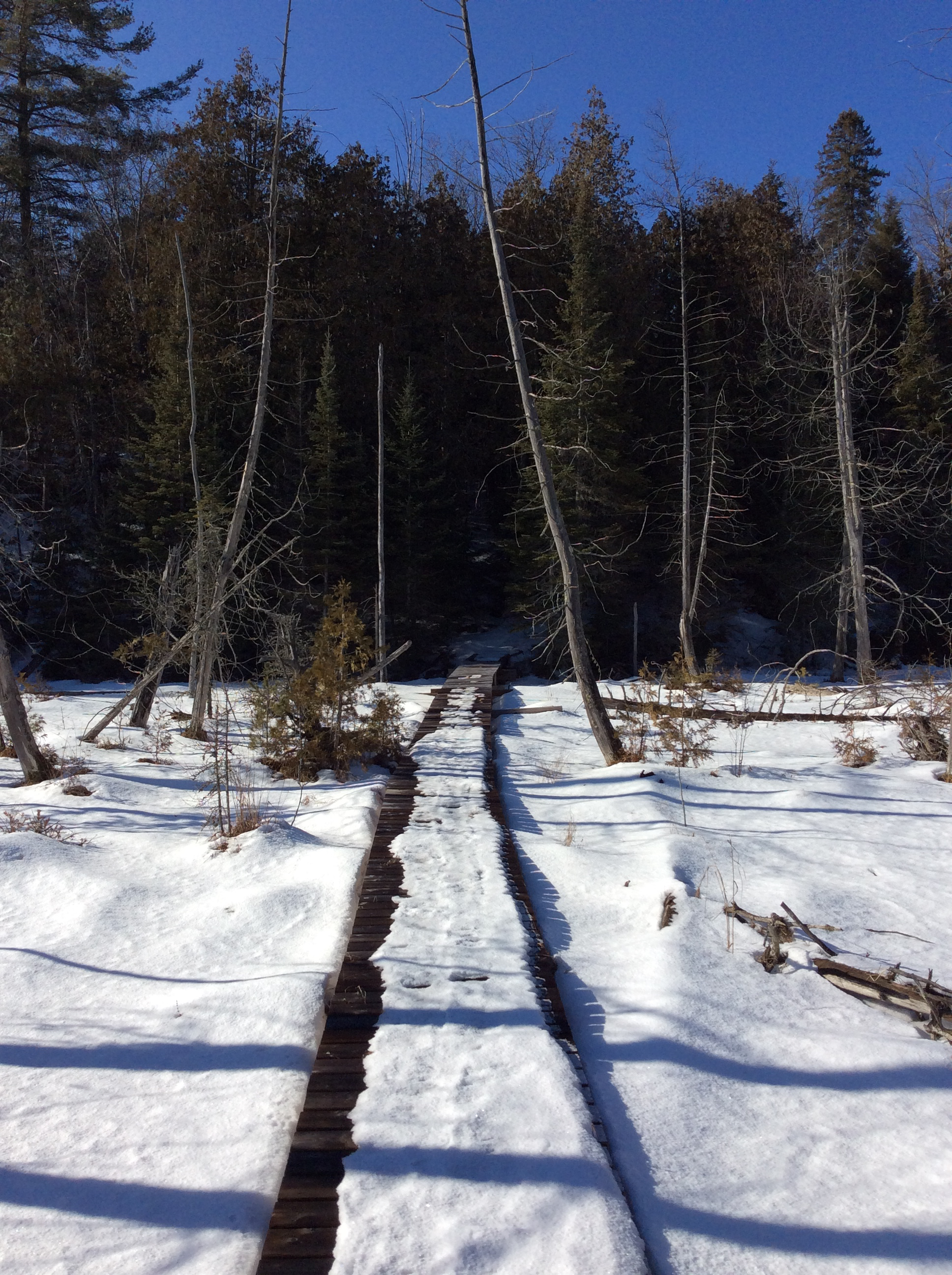 Snowshoeing the Marsh Boardwalk at The Bear Stand