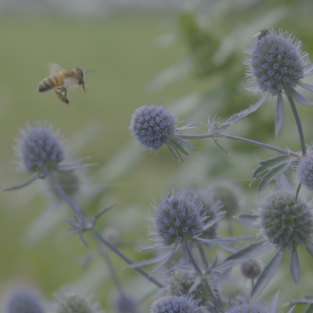 Bee keeping, joy & passion - Penguin Random House