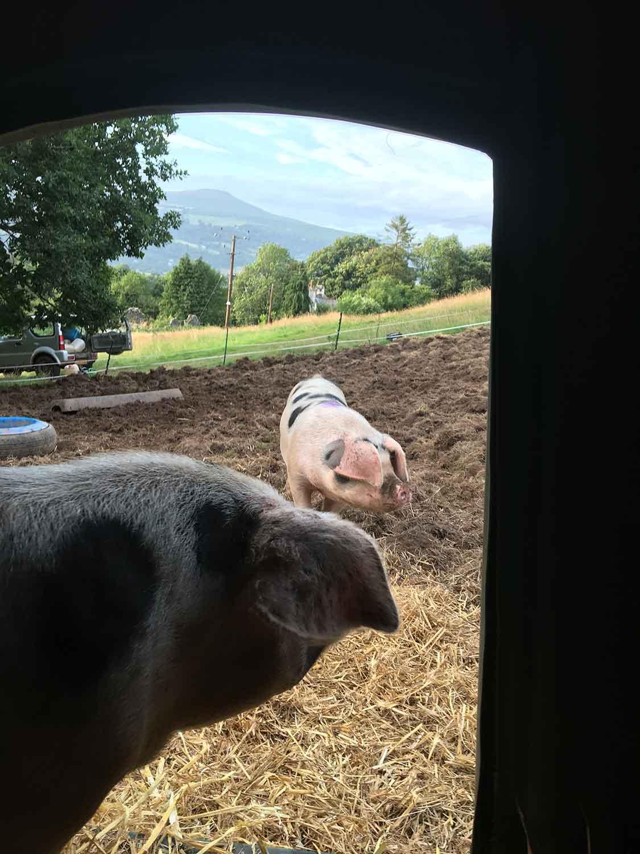 Free-range-meat-in-Abergavenny-South-Wales.jpg