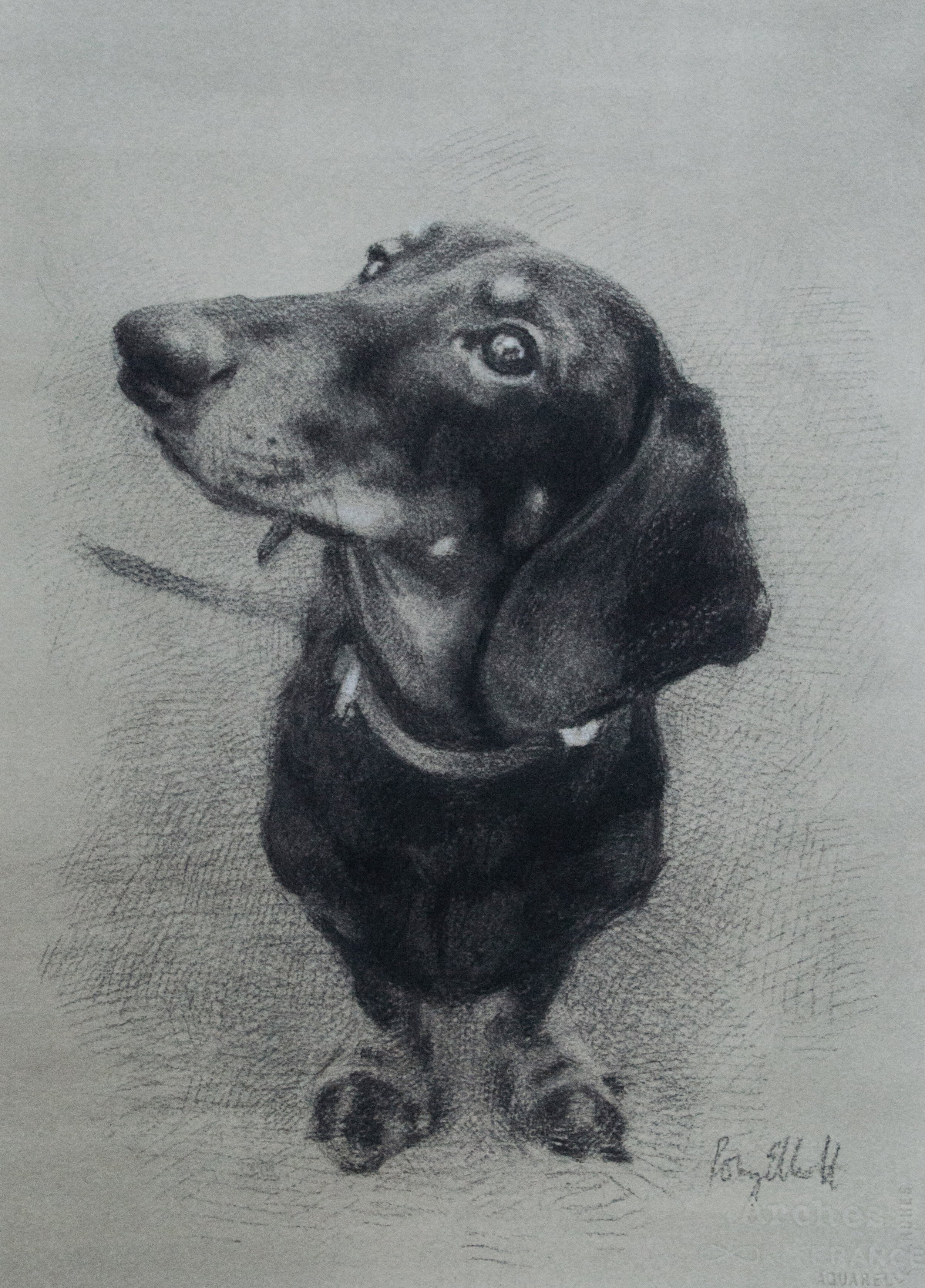 Charcoal and white chalk, Dachshund. 16x20 inch.jpg