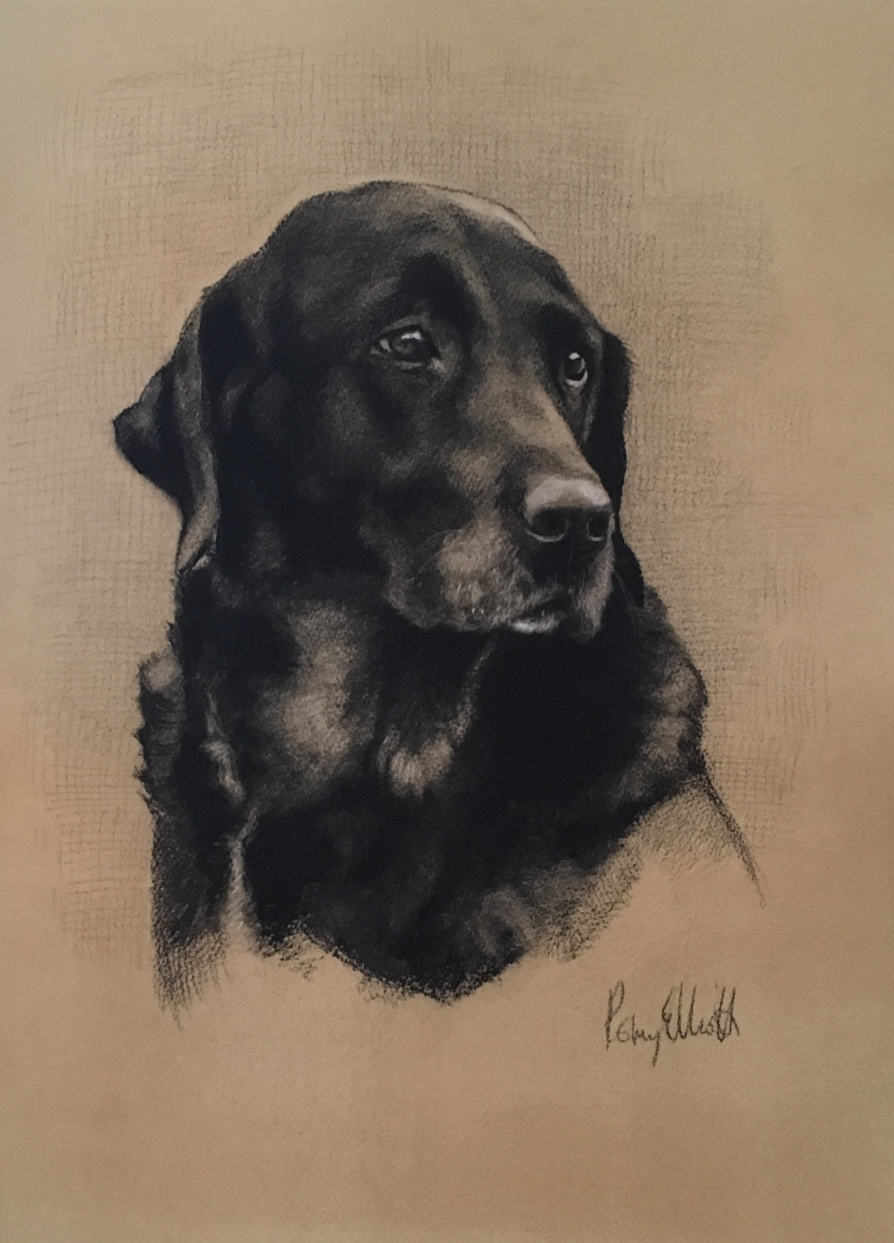 Black Labrador, Daisy. Charcoal and chalk