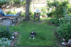 garden-photo.jpg