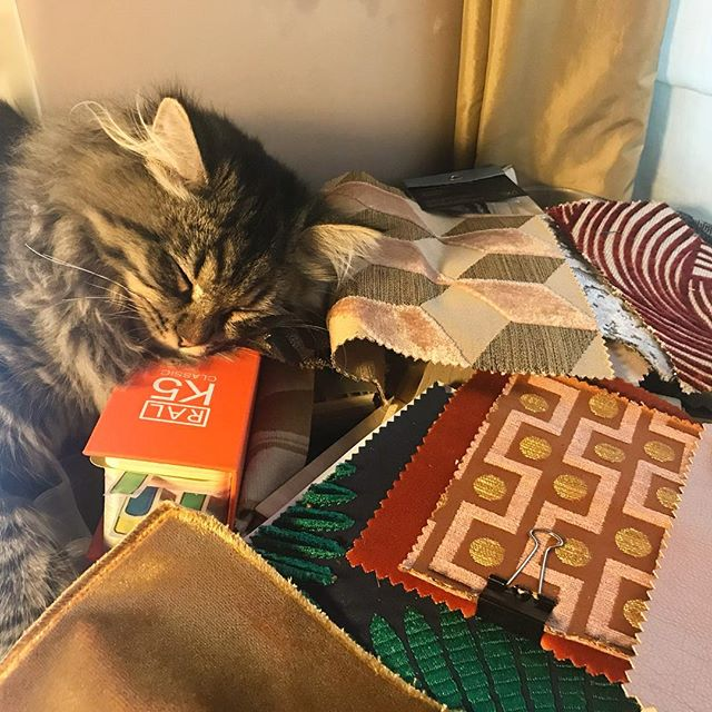 After a week of hard work, our cat Coco decides to nap surrounded by fabrics, using the RAL colour chart as a pillow!! . . . . . #cocothecat #coco #catsofinstagram #interiordesign #interiordesigner #interiordecorating #fabrics #interiors123 #interiors4you #interiors4all #interiores #home #homedeco #londoninteriors #deco #decor #interiordecor #designer #interiorismo #londonhomes #interiorstyling#ralcolours