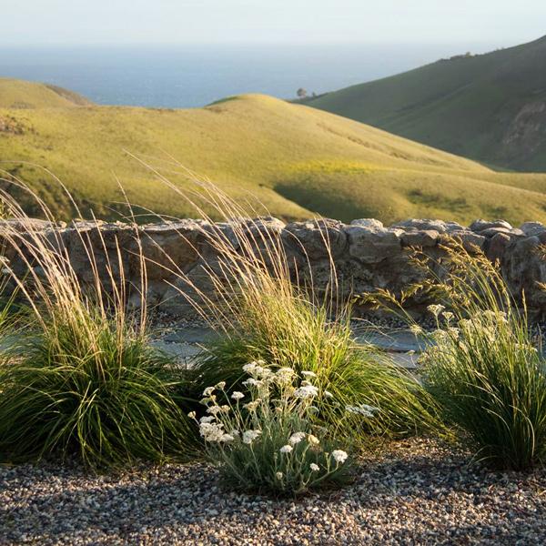 Featured Garden -