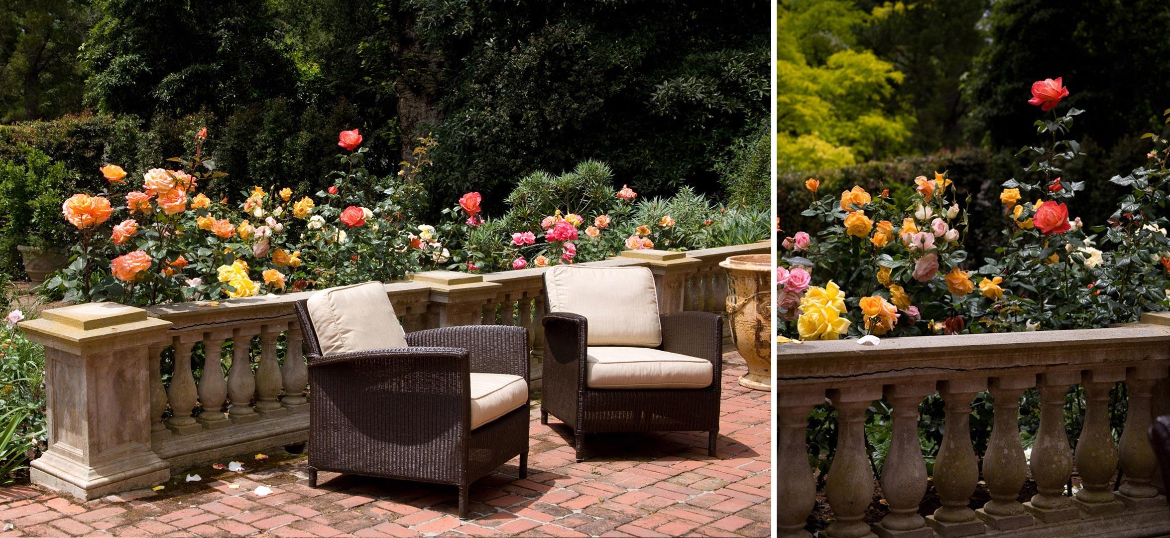 Montecito-04-roses-patio.jpg