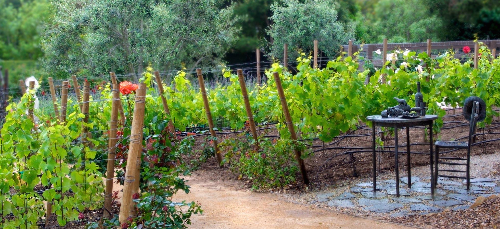 4-vineyard.jpg