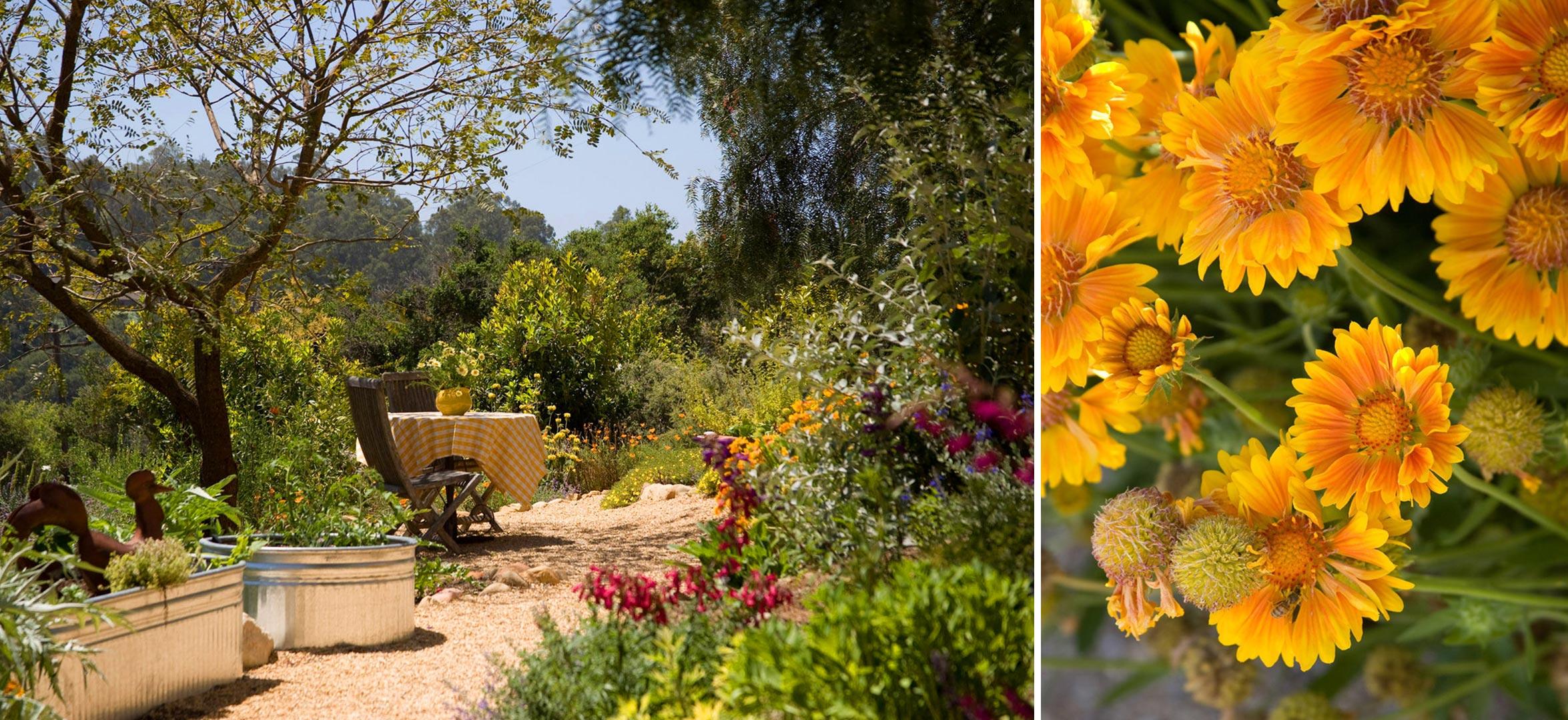 3-gravel-path-daisies.jpg