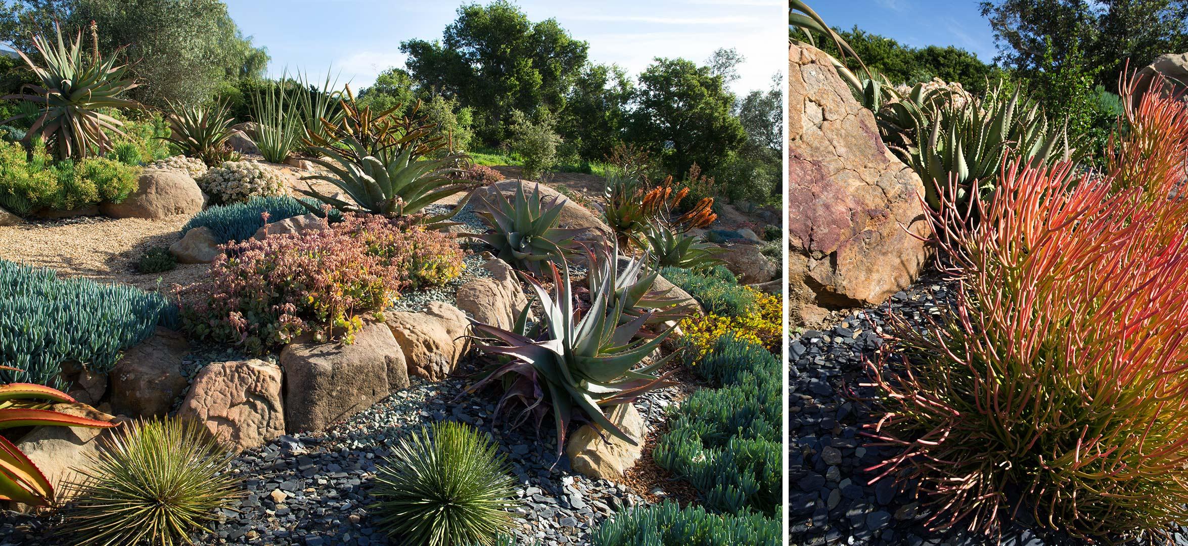 succulents-6.jpg