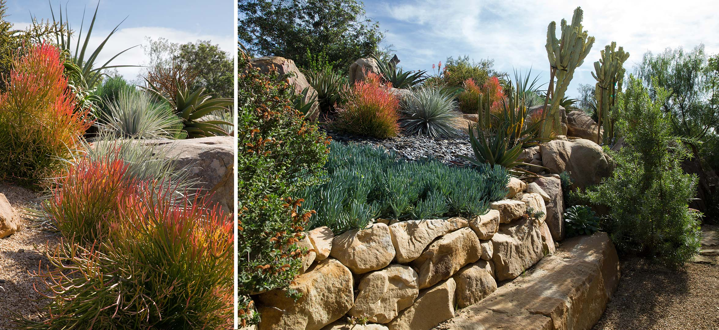 succulents-stone-bench.jpg