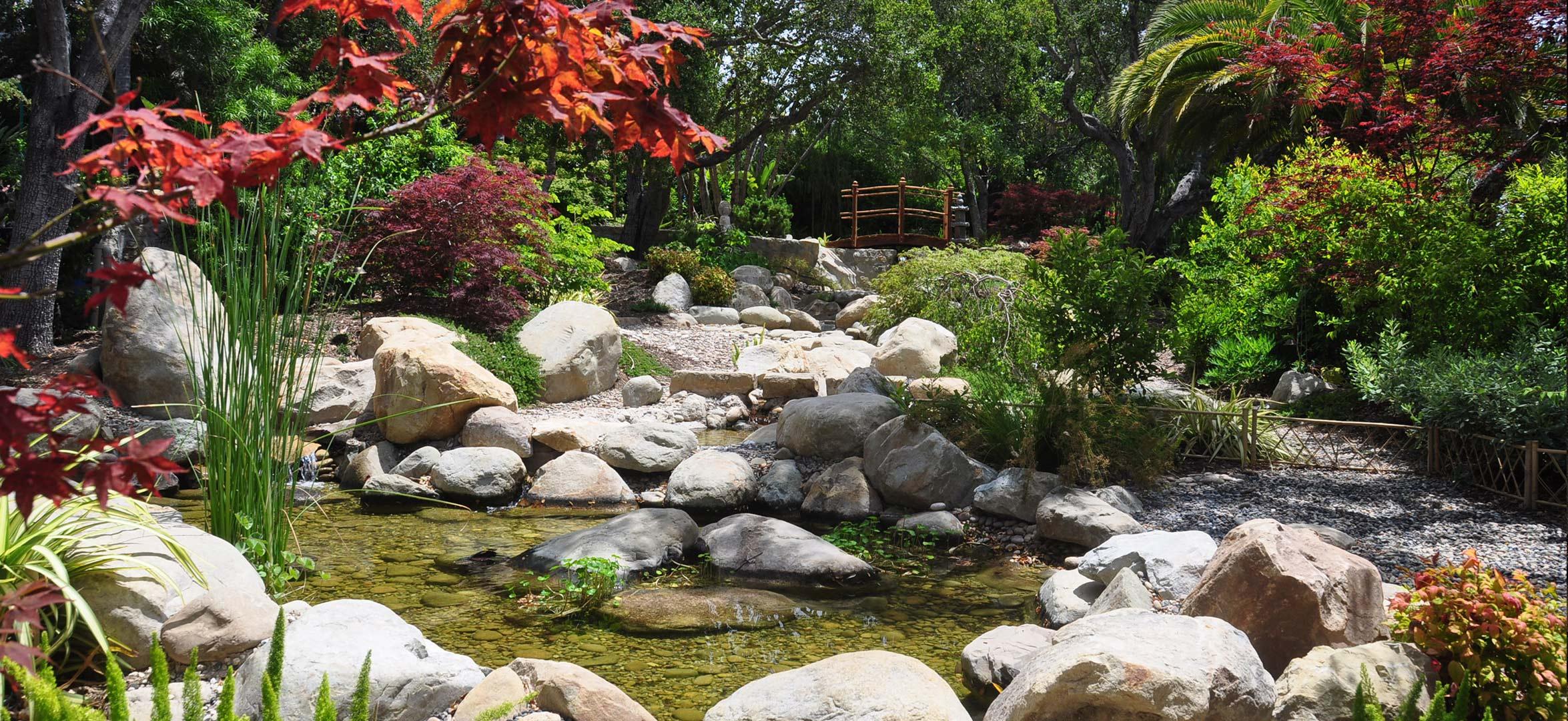 river-japanese-maple.jpg