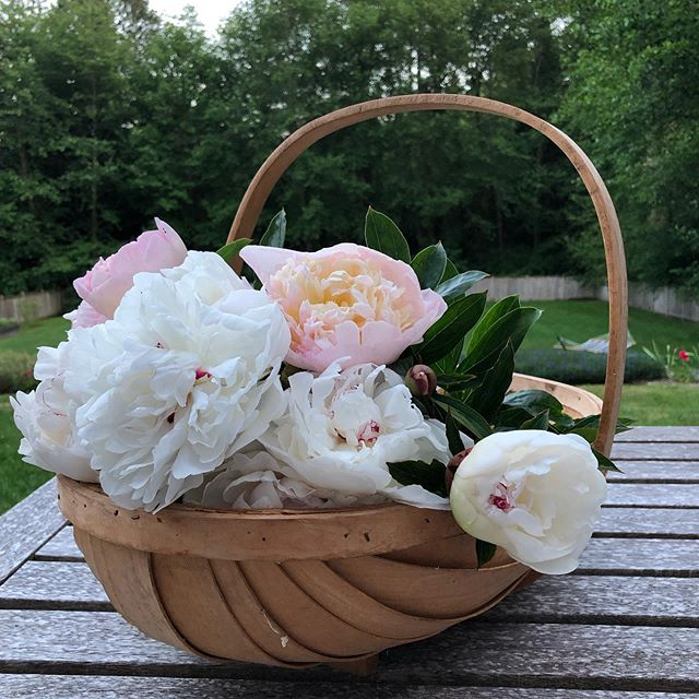 Such a satisfying and beautiful flower. #peony #peonies In my favorite basket from one of my favorite friends ❤️