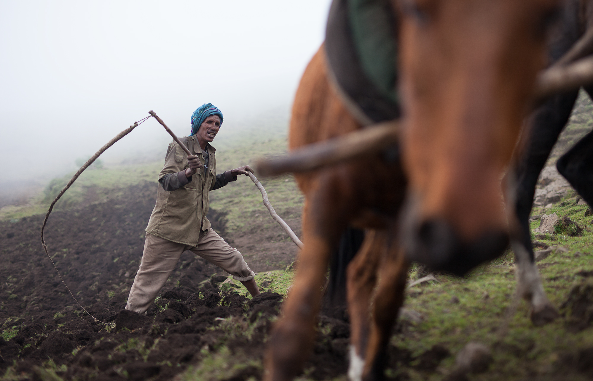 Negus Mahari is plowing his field on the Sona Plateau in the Simien Mountains