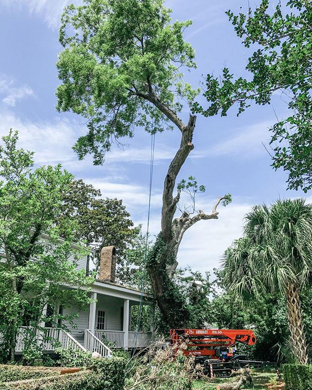 TBTree.  This pecan tree didn't make the cut!