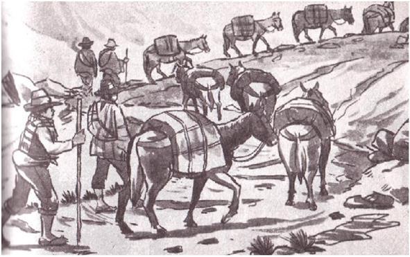 Recuas de Mulas y sus arrieros