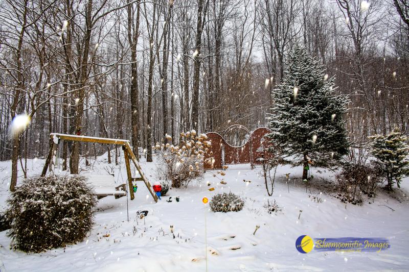 Snow Day5 web.jpg