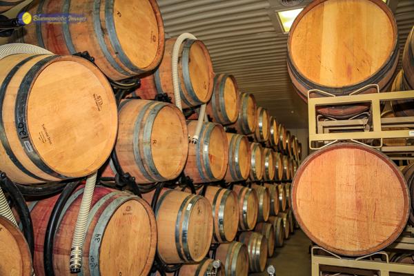 Abingdon Vineyard Blog v10 web.jpg