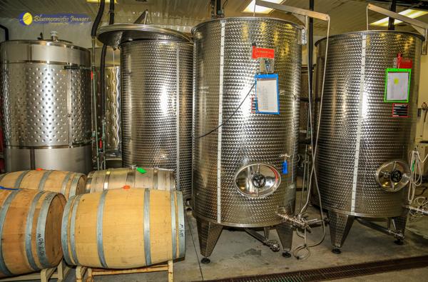 Abingdon Vineyard Blog v11 web.jpg