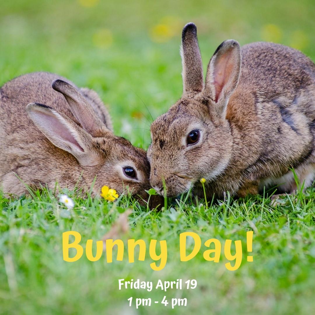 Bunny Day!.jpg