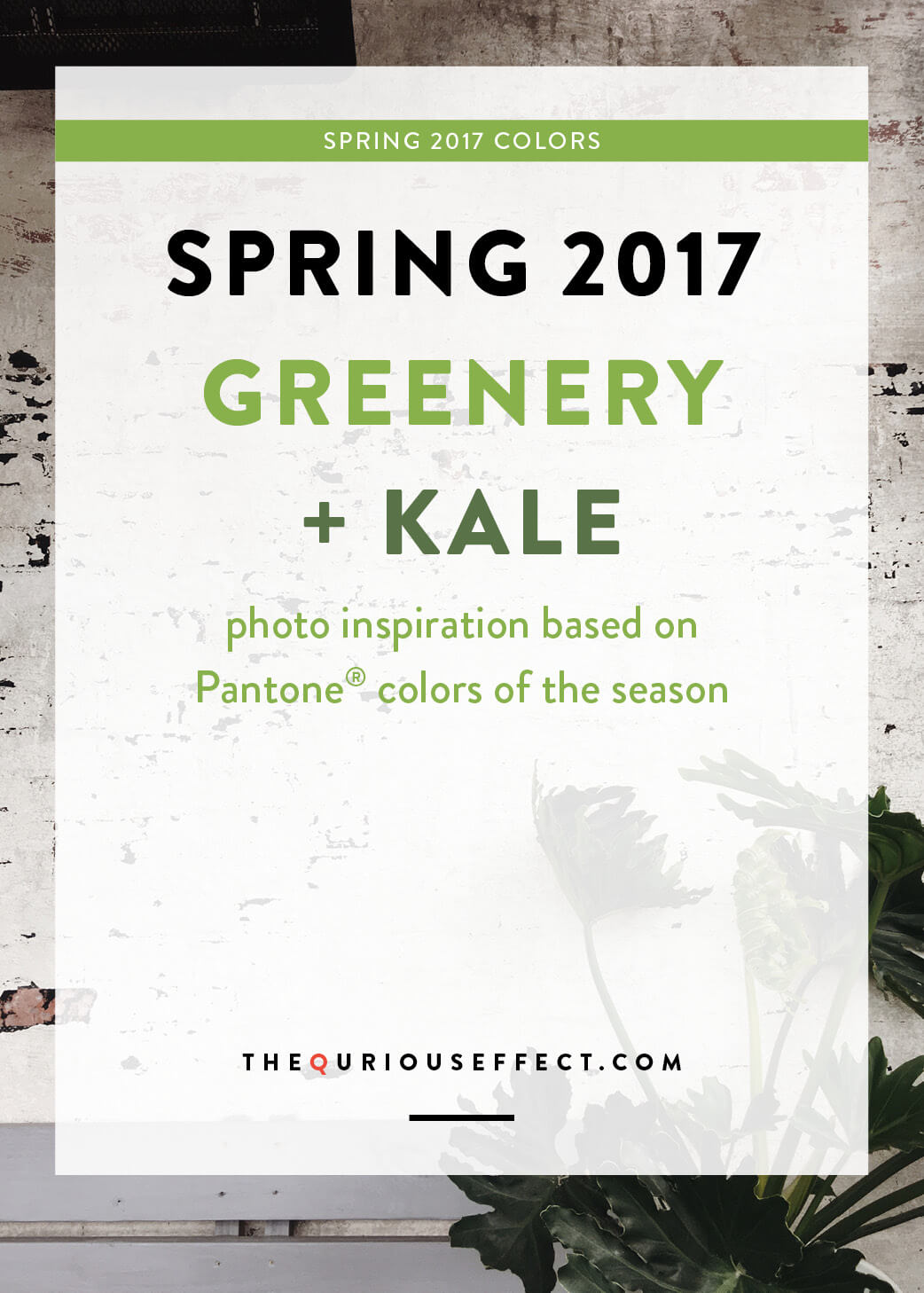 Spring 2017 Pantone® Color Photo Inspiration by The Qurious Effect. A Brand and Squarespace Web Design Studio.