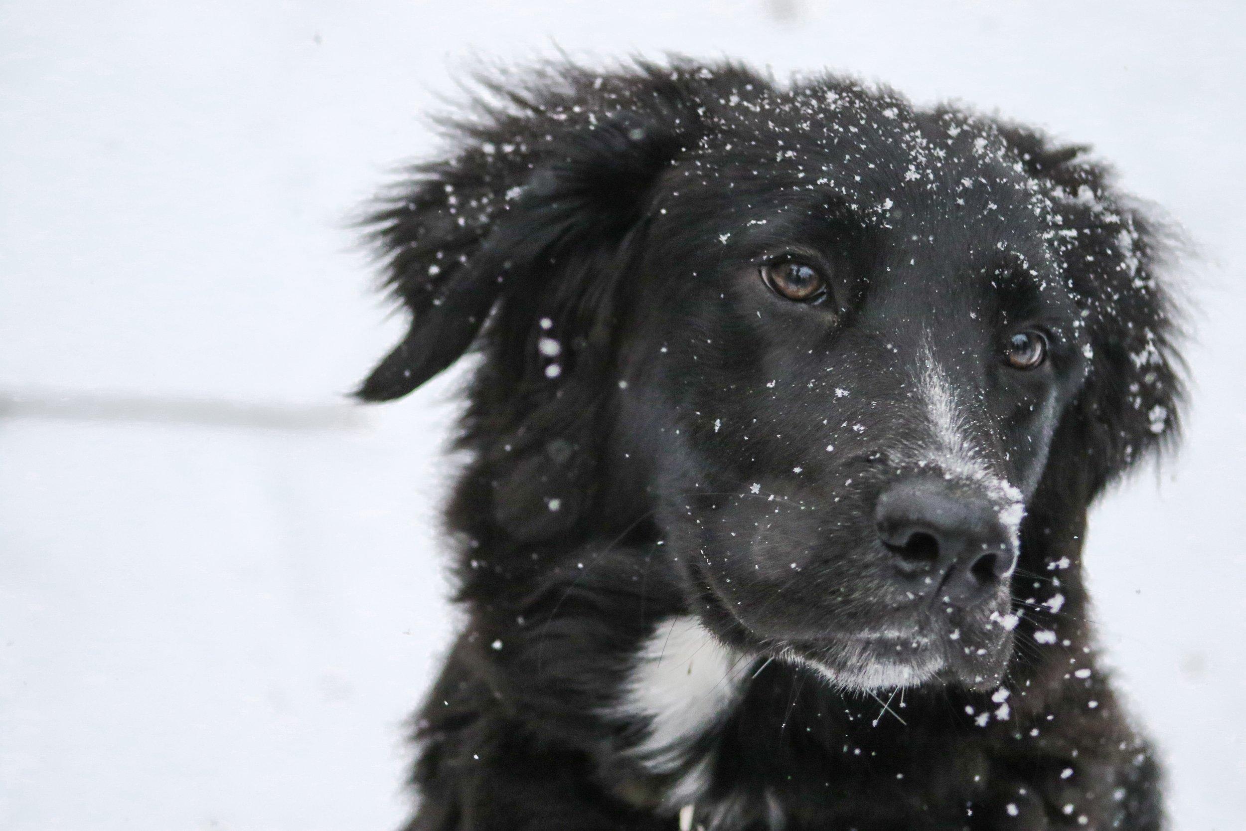 Aspen Concierge Service for Pets