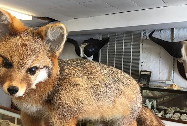 Fox_n.jpg