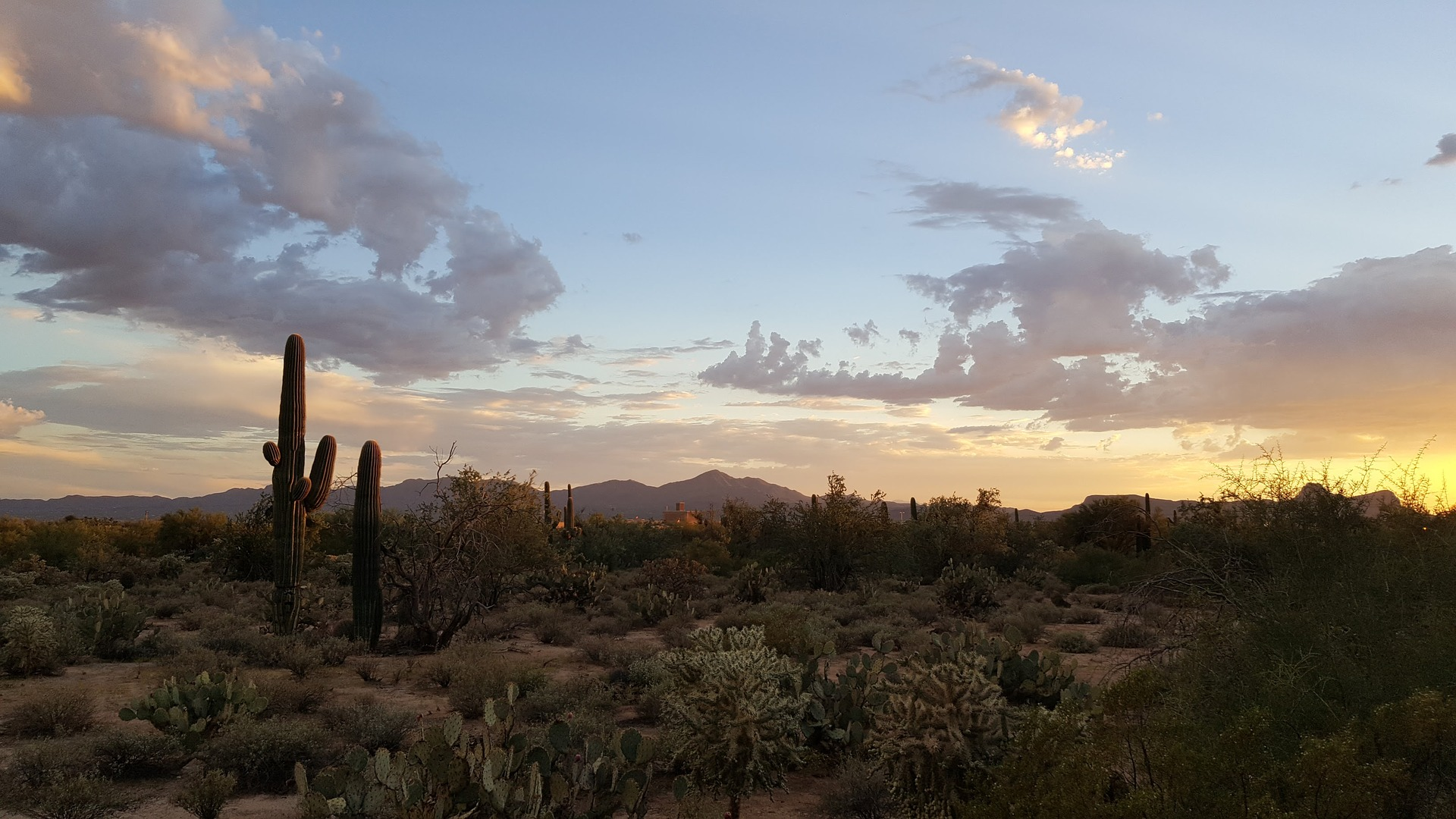 saguaro-2714996_1920.jpg