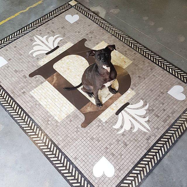 Brown's Socialhouse Custom Floor Medallion (pit bull friend for scale)