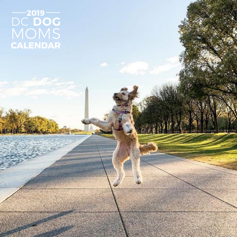 DC DOG MOMS 2019 CALENDAR - UPDATE: We have a few calendars still available. Please email us at dcdogmoms@gmail.com to purchase.The DC Dog Moms Calendar features more than 150 beautiful photographs of dogs around Washington, Maryland, and Virginia. Each page includes hi-resolution photographs in vibrant colors at local landmarks and some special dog-related holidays!A portion of each sale will benefit local rescue groups.