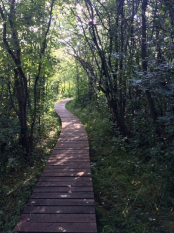 Wooden pathways like this are a common sight along singletrack in Duluth, bridging trail over wet areas.