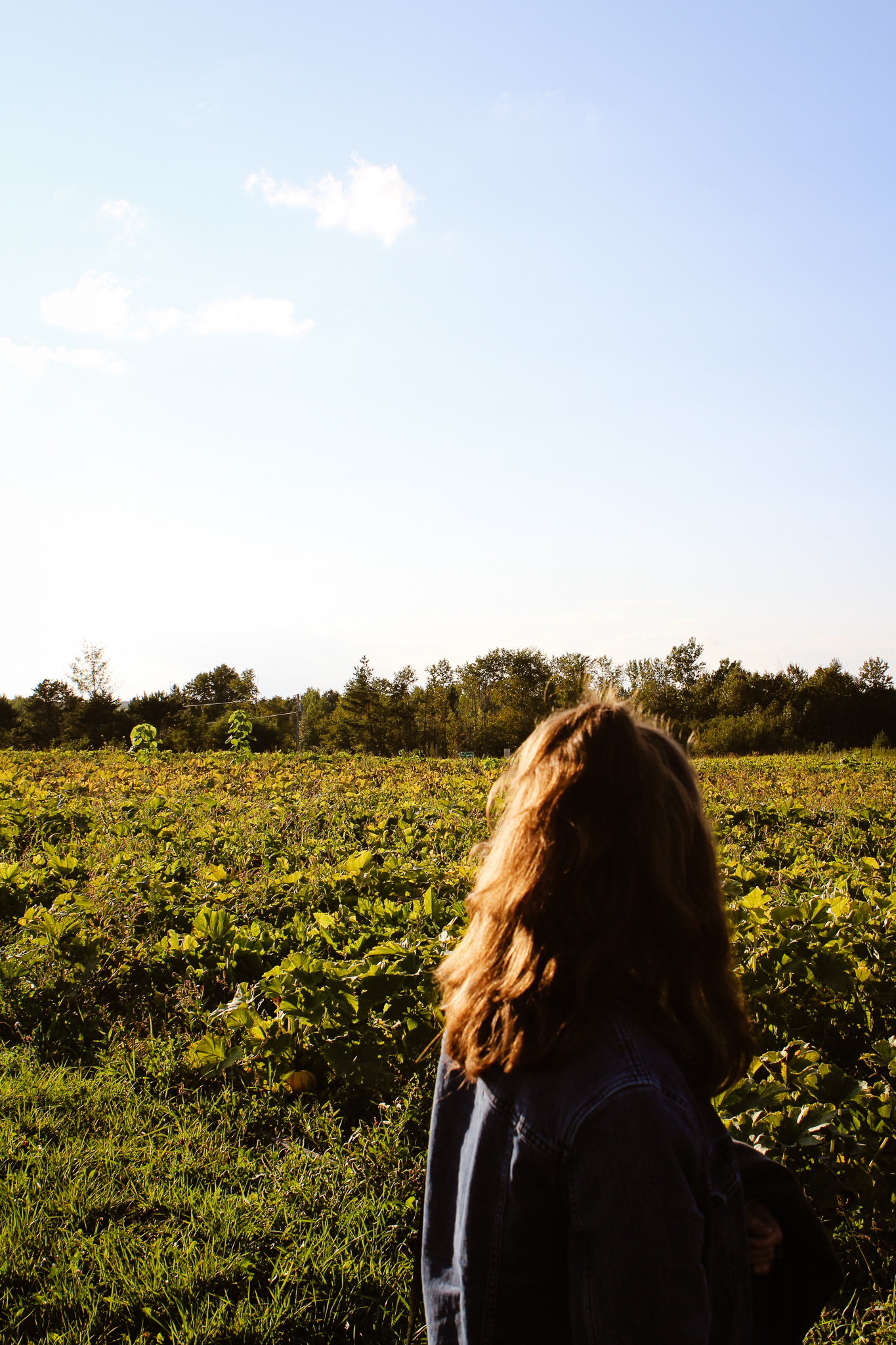 UMD student looking out over the SAP farm. Photo taken by Morgan Pint.