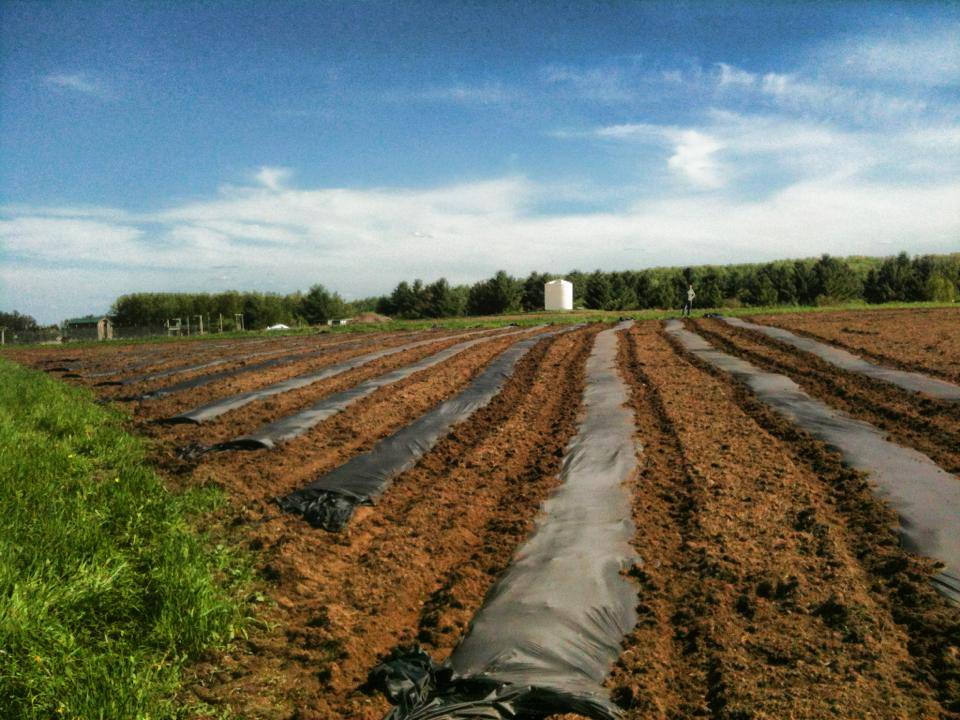 Pictured, some of the planted fields located on the UMD SAP Farm's land. Photo courtesy of UMD SAP Farm.