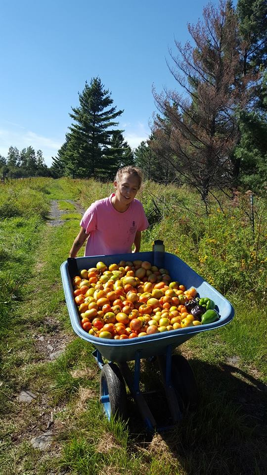 Megan Forcia working on SAP Farm. Photo courtesy of UMD SAP Farm.