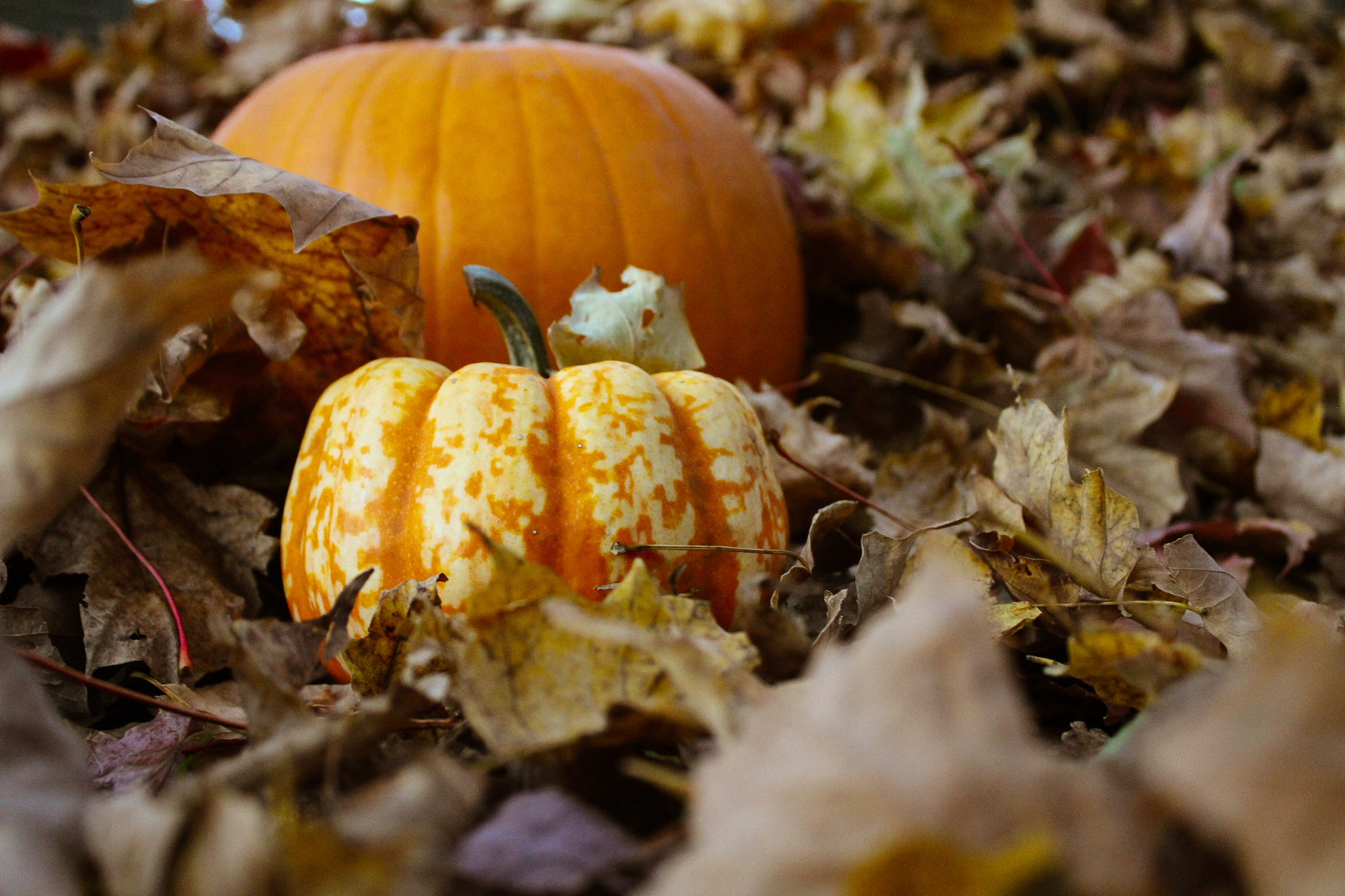 Duluth has many different events happening during the Halloween season. Photo by Morgan Pint