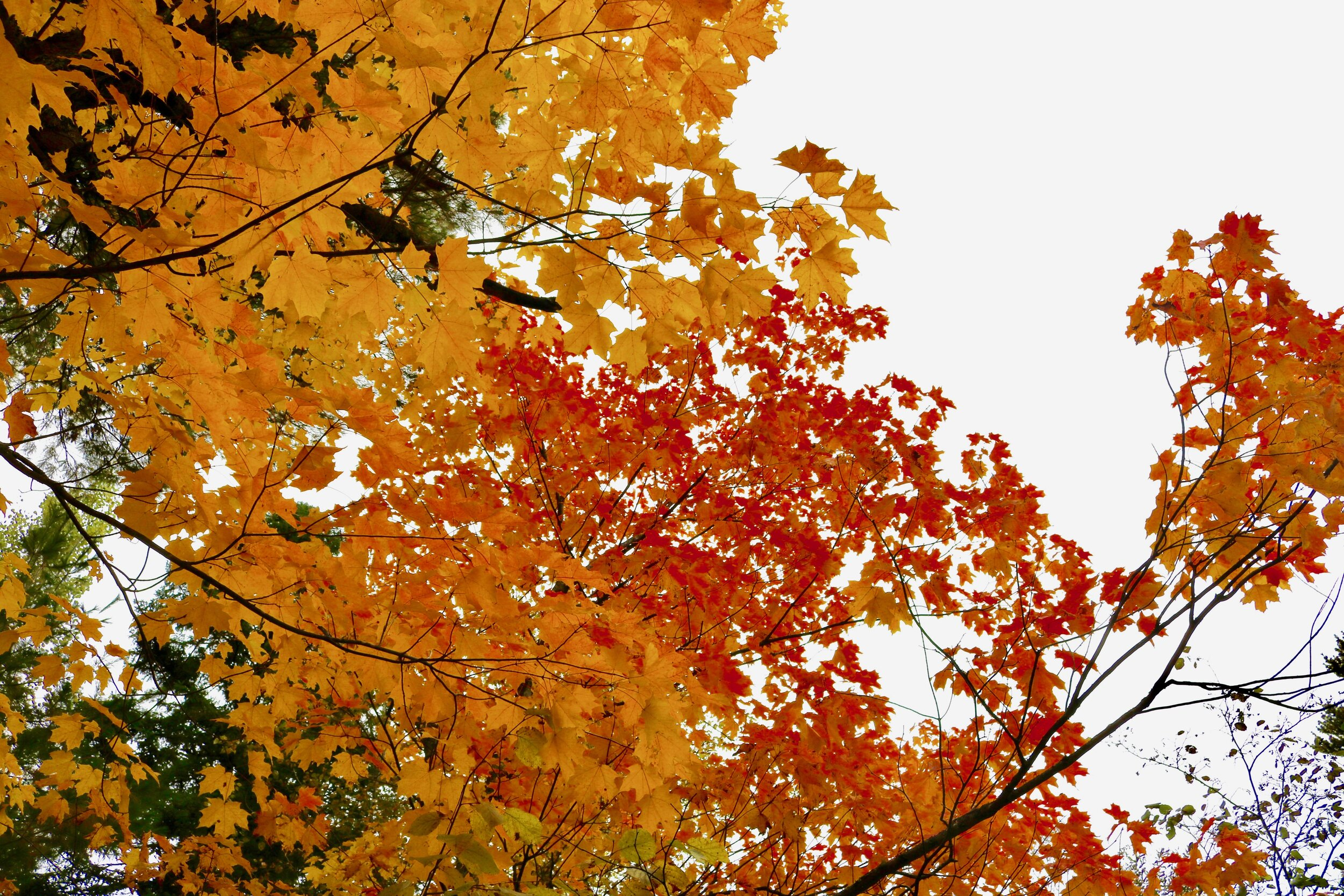 Fall leaves along the north shore. Photo by Brianna Taggart