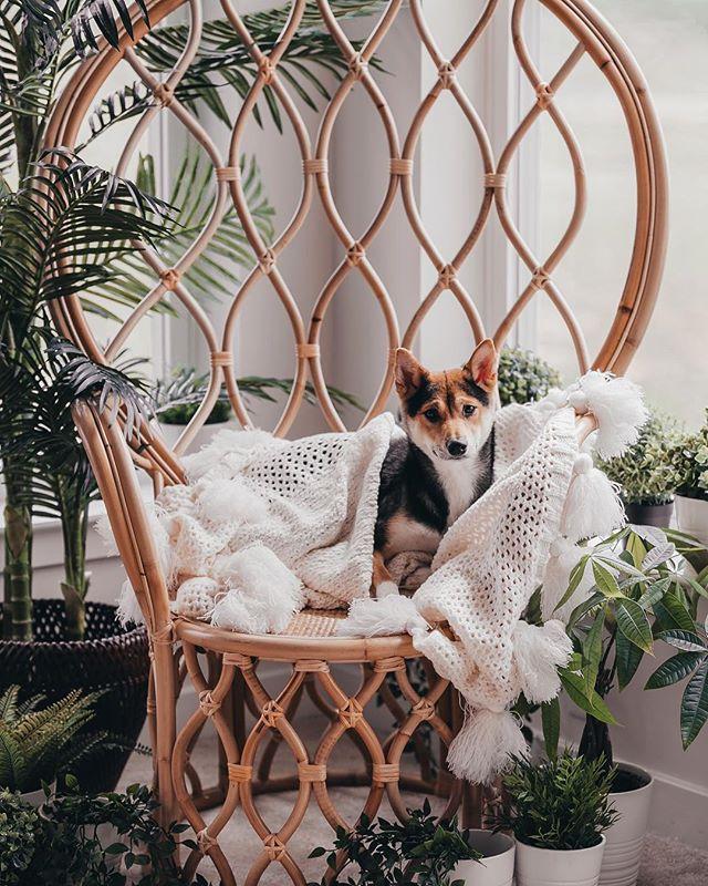 Foum a nëw Šįttįn špøt tœday 🏆 • • • • #shiba #shibainu #shibastagram #dogsofinstagram #dogstagram #shibadog #shibalove #pupper #puppy #dogs #shibapuppy #shibasofinstagram #japanesedog #dogoftheday #shibalovers #instashiba #shibe #shoob