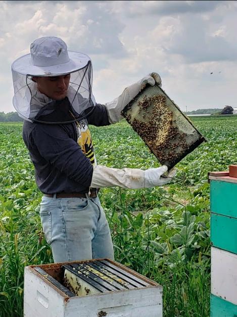 trent balduff inspecting hives