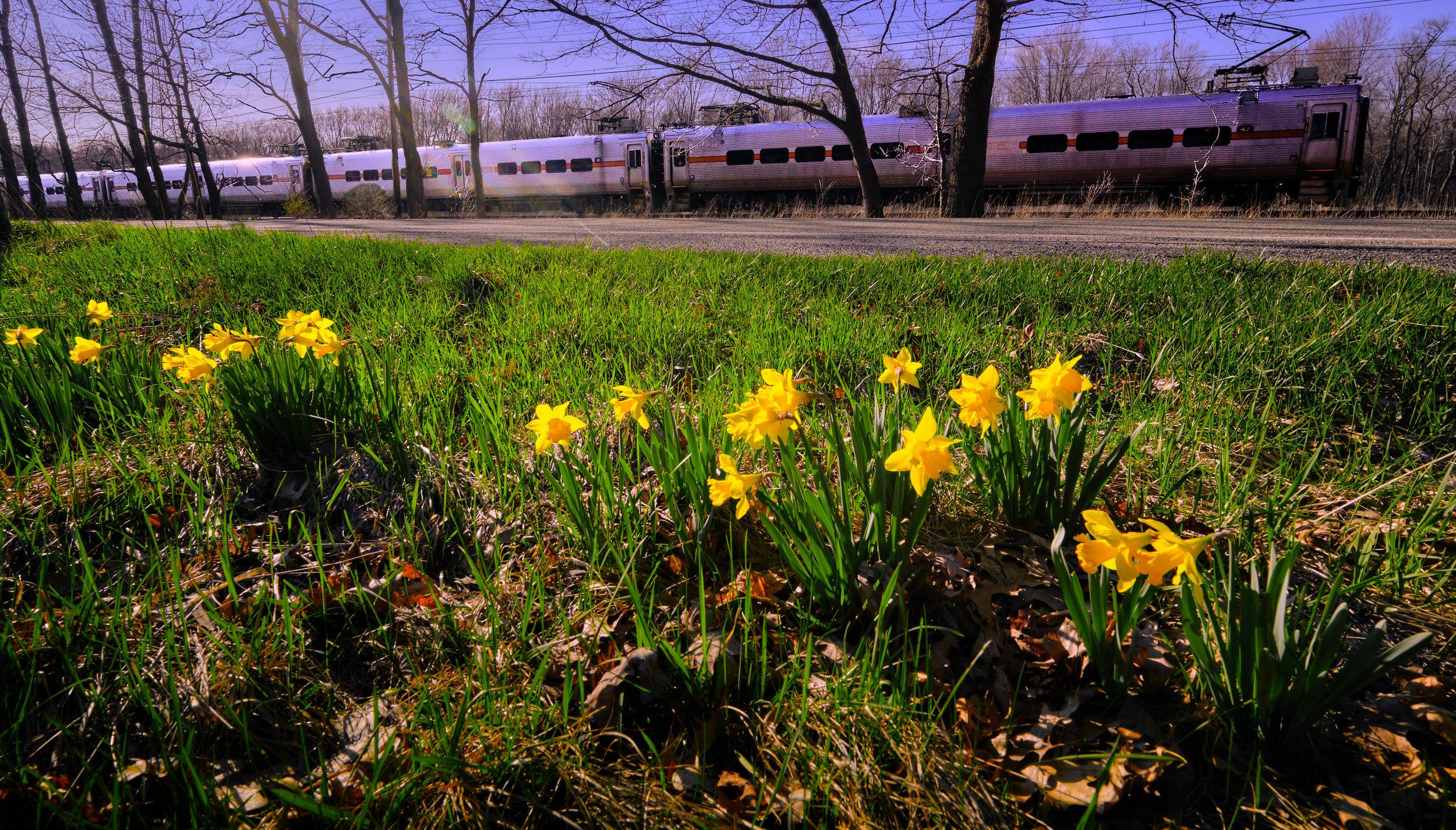 South Shore Spring-208.jpg