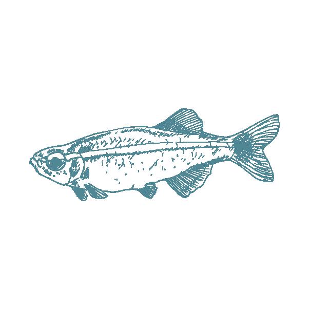 Fish 1.png
