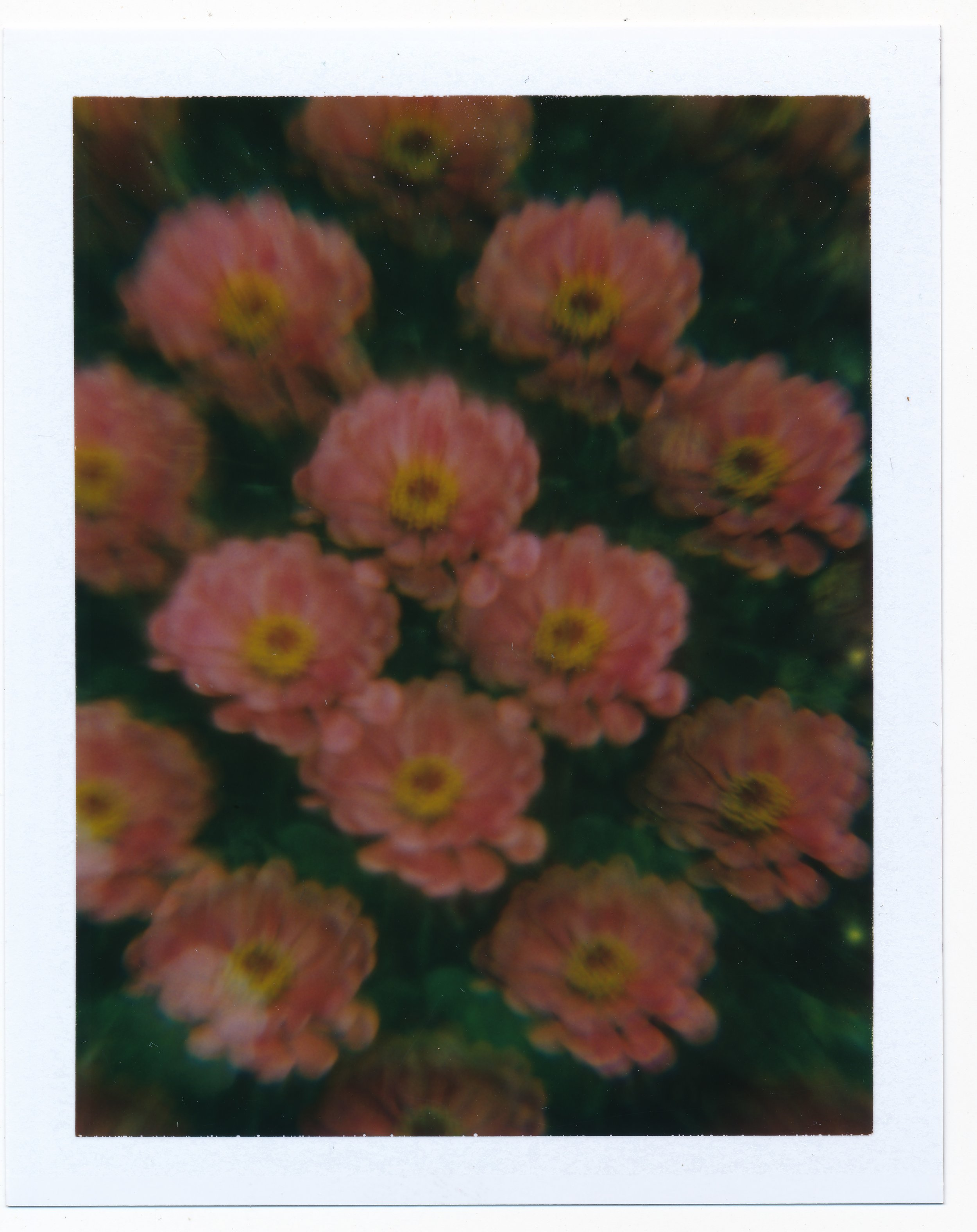pinkflowers.jpeg