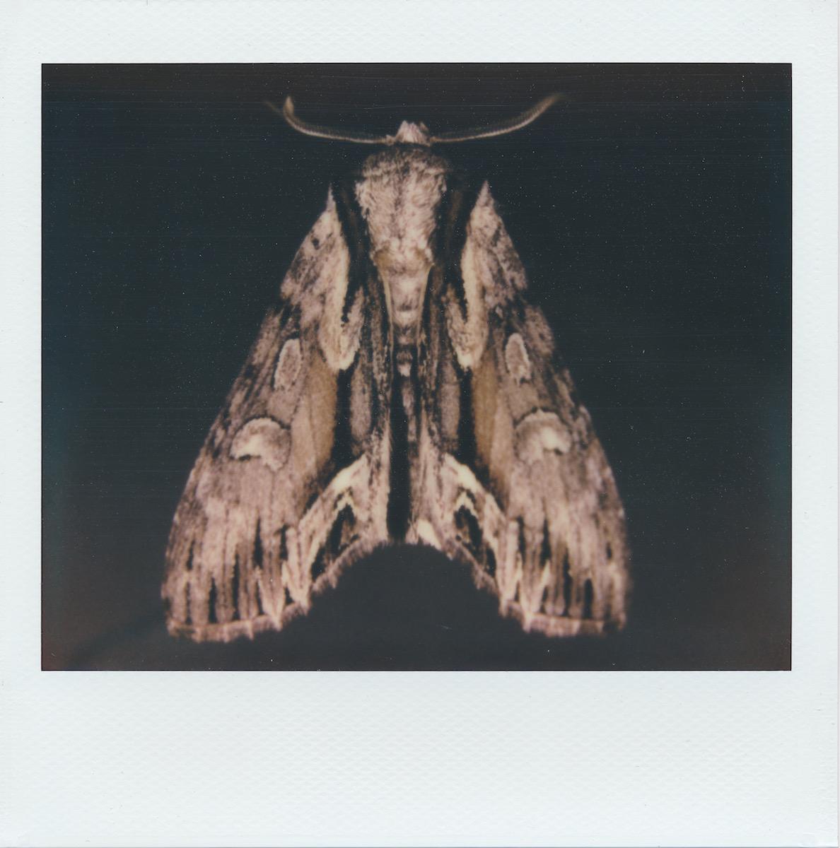 mothpolaroid.jpg