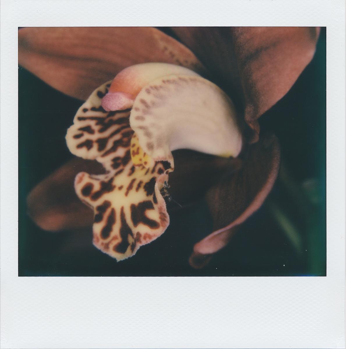 orchidandant.jpg