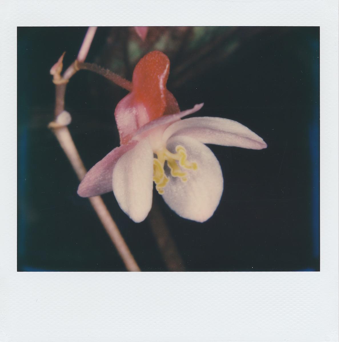 pinkandpurpleflower.jpg