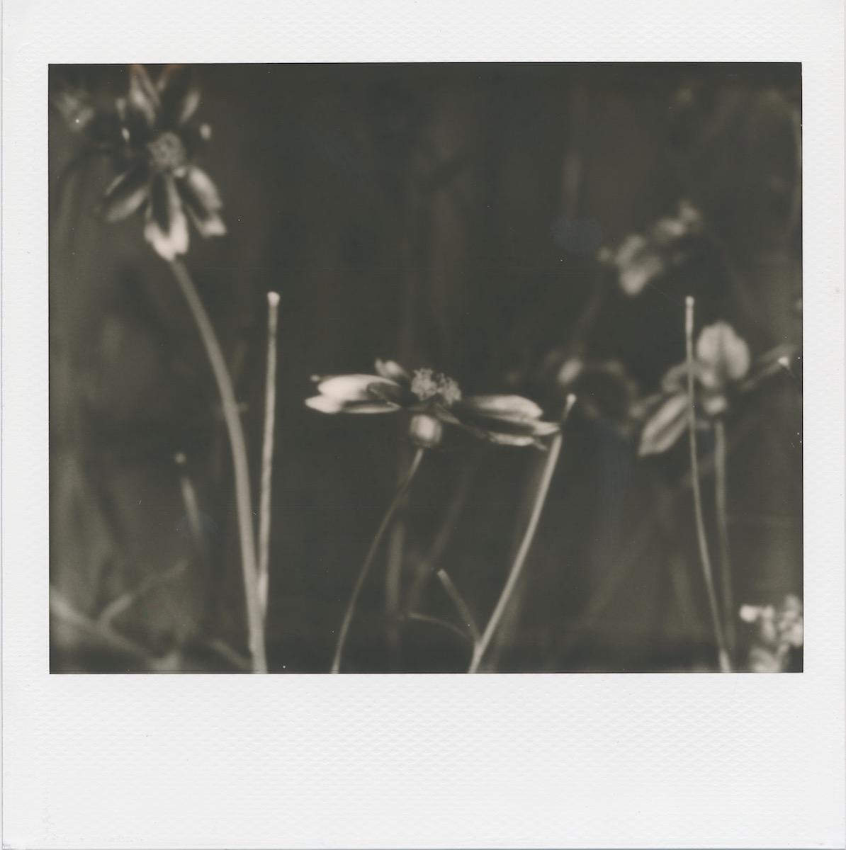 bwflowers.jpg